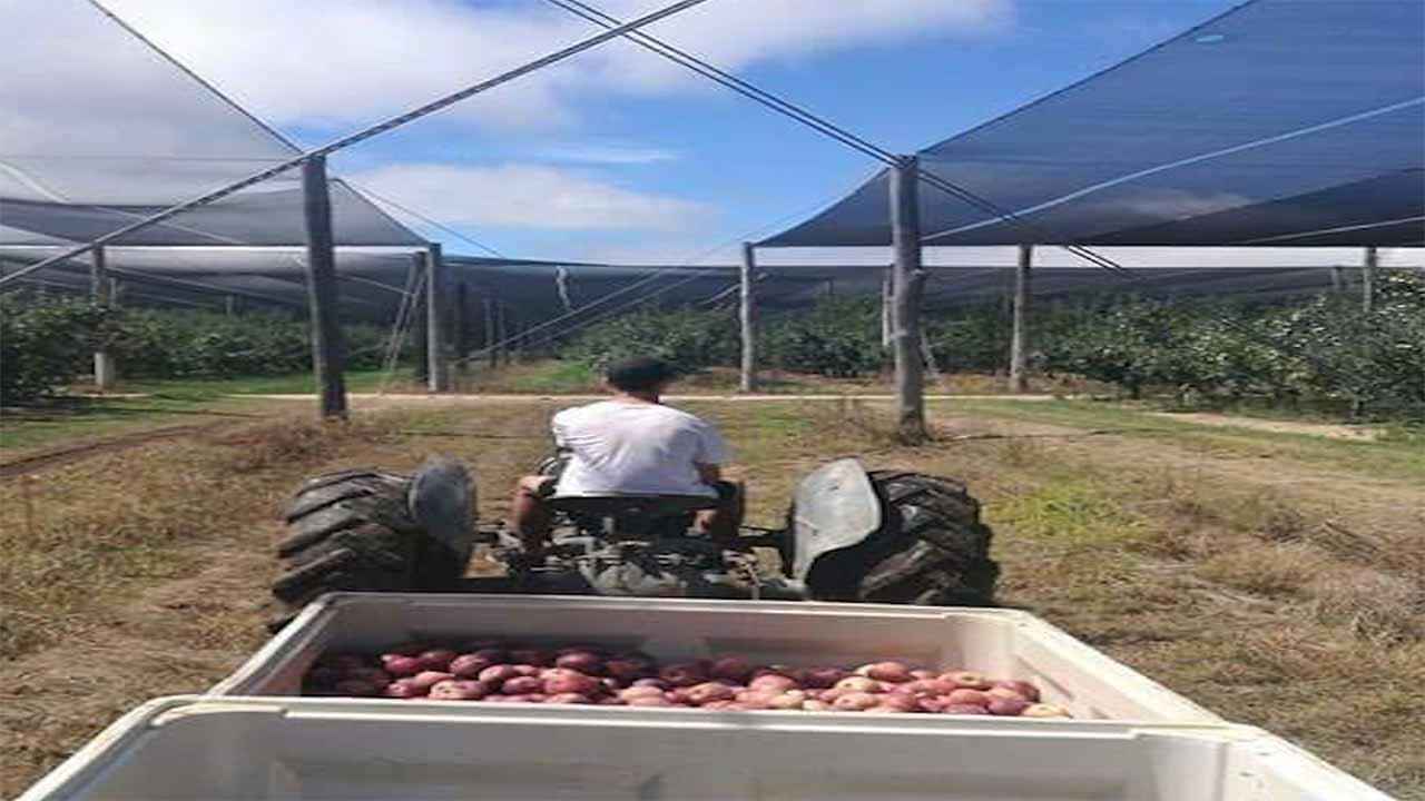 trabajar en una granja en australia