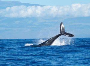 la temporada de ballenas en gold coast