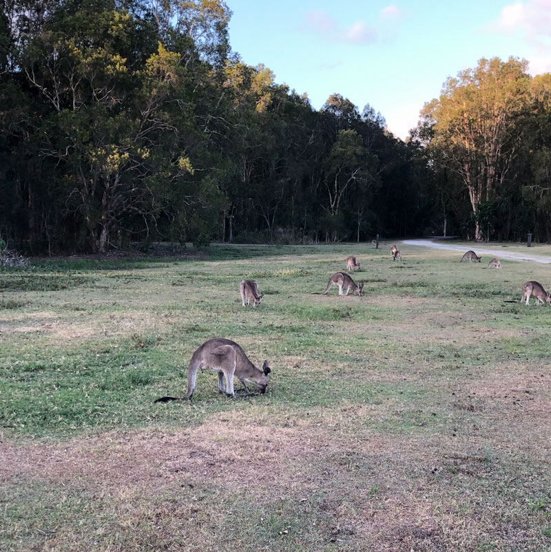 Coombabah Natural Park Australia