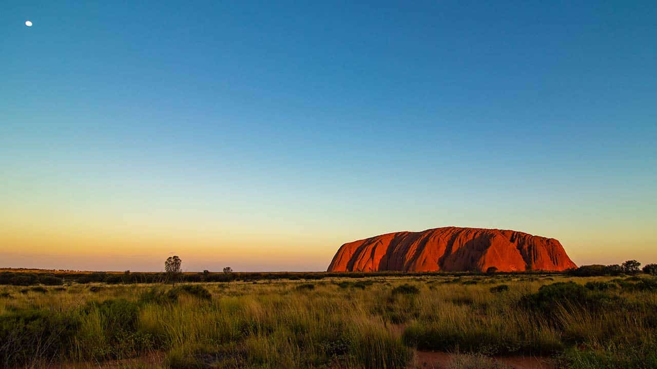 11 Curiosities of the Australian desert - Dingoos
