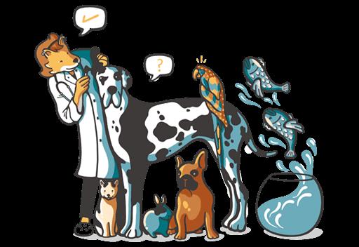 Work as a veterinarian in Australia