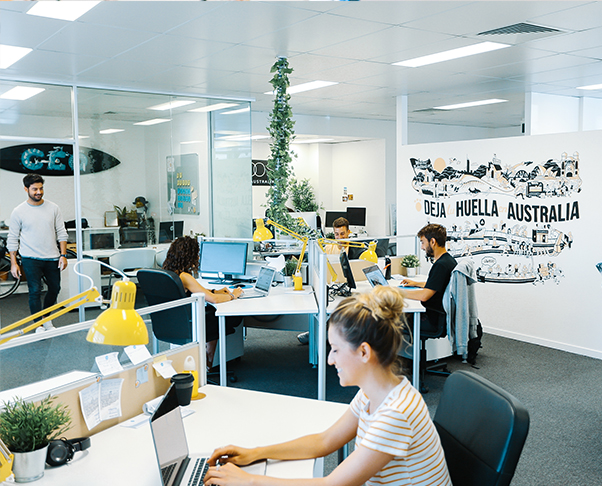 Oficina Dingoos Gold Coast