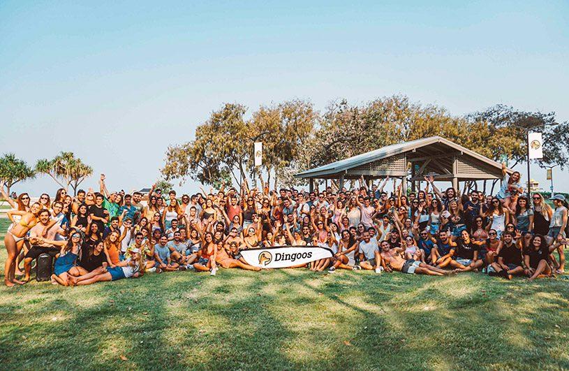 comunidad dingoos