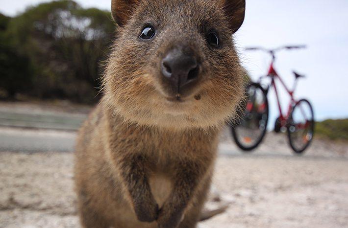 mitos sobre australia